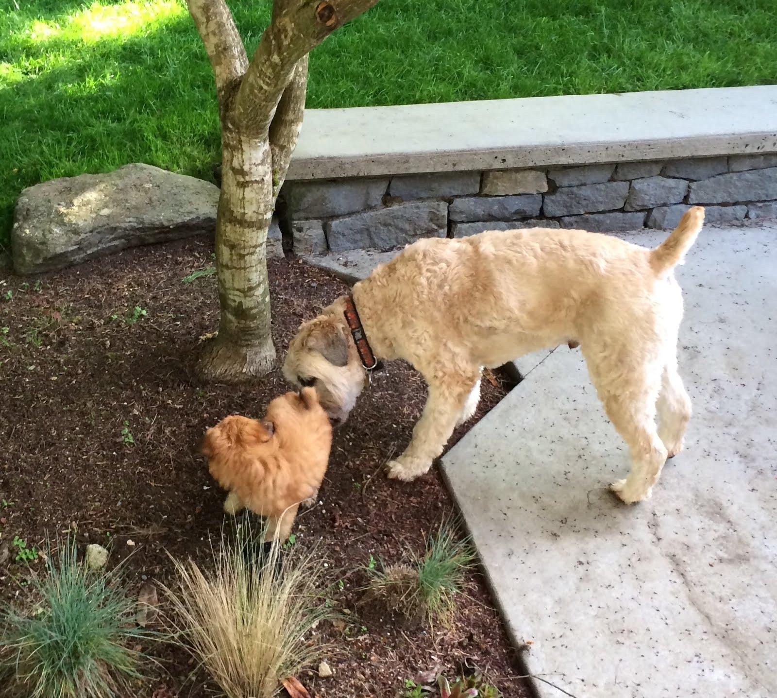 Murphy & Finn May 2016