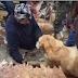 Αίσιο τέλος! Οι σκύλοι που σώθηκαν από τους τυφώνες και βρήκαν την οικογένειά τους...