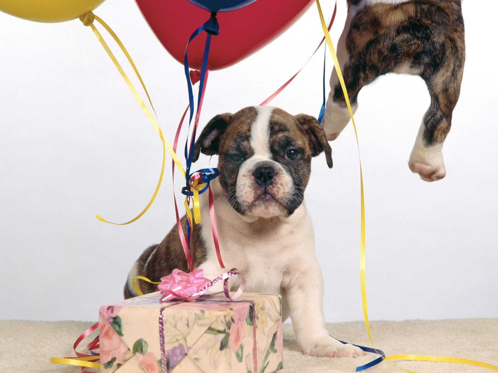 Displaying 18> Images For - Cute Happy Birthday Dog Pictures...