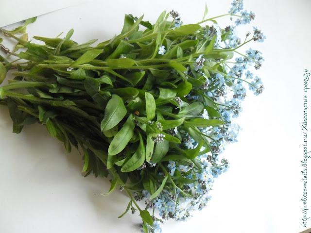 Незабудочник гребенчатый, бруннера, трава от простуды и грипа, жаропонижающая трава