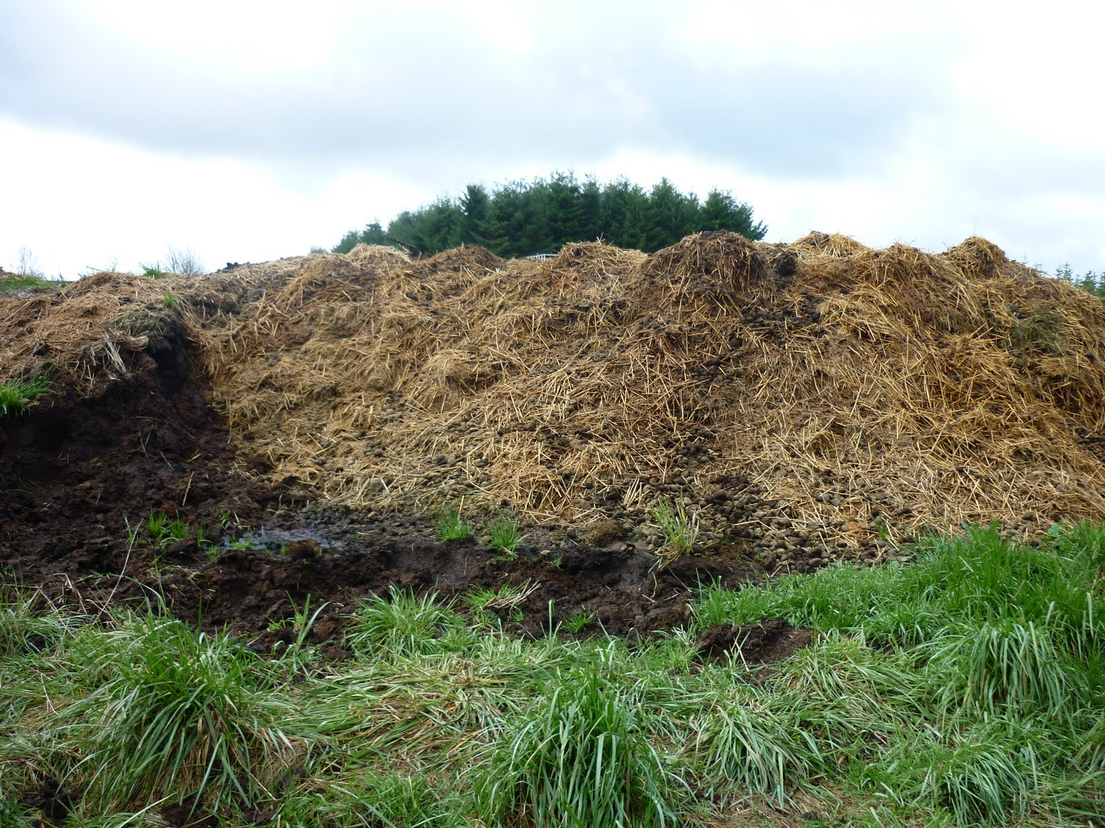 plot 5e collecting horse manure compost