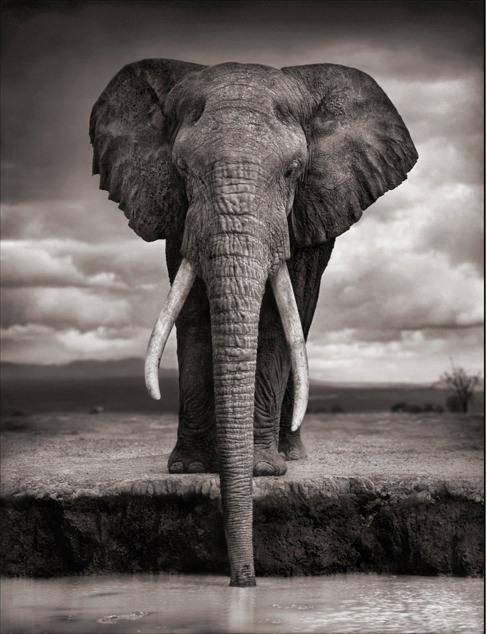 Ele não encontrou o de que carecia, o de que carecemos, eu e meu elefante, em que amo disfarçar-me.