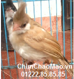 Chim Chao Mao, Chim Chao Mao Nau Cafe