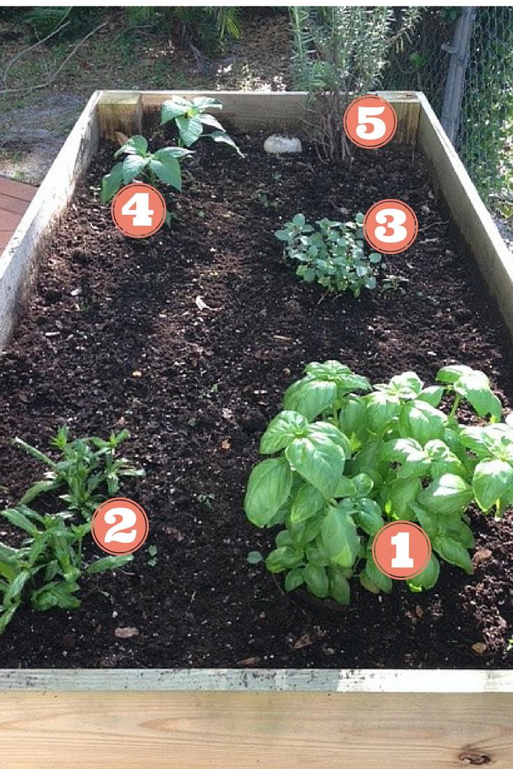 Refreshed Herb Garden