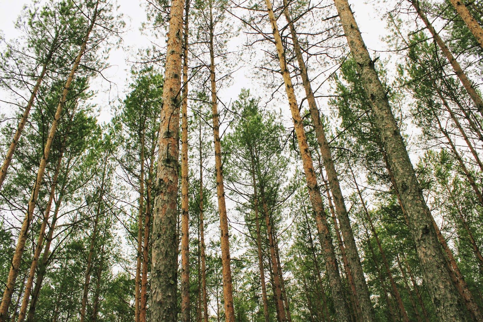 Fotografowanie w lesie