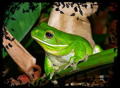 http://indiarebelde.blogspot.com/2012/07/elogios.html
