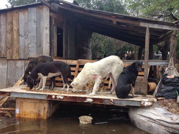 Stop al maltrato animal construir n albergue para for Actividad de perros en el jardin botanico de caguas