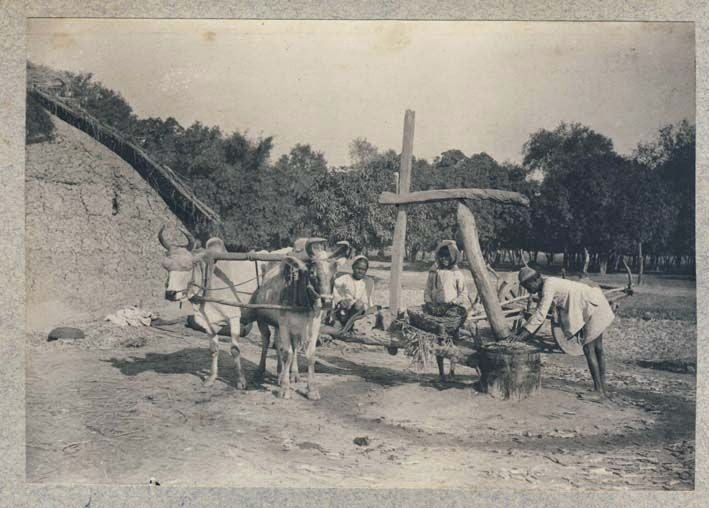 Local Sugar Mill - Rural India, Date Unknown