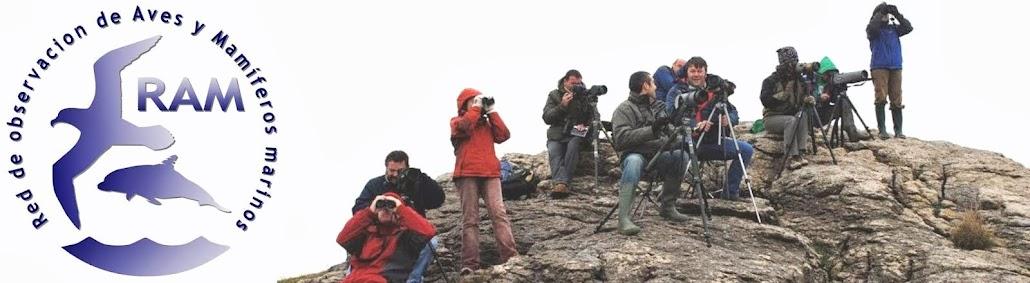 RAM: Red de observación de Aves y Mamíferos marinos