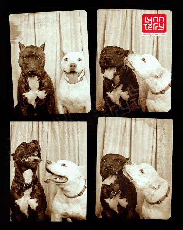 perros en una cabina de fotos