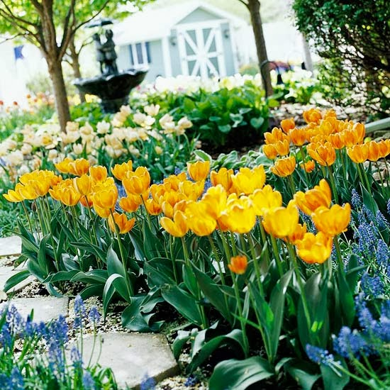 10 top perennial tulips my enchanting cottage garden 10 top perennial tulips mightylinksfo