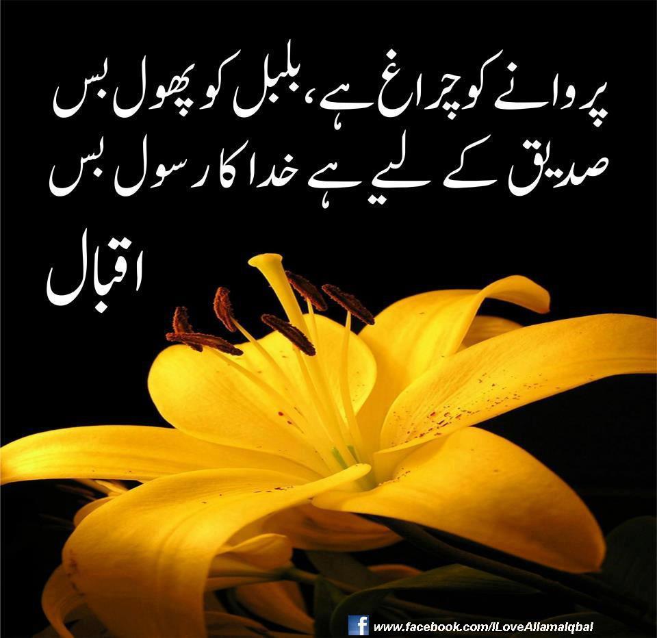 essay on my favourite poet allama iqbal in urdu