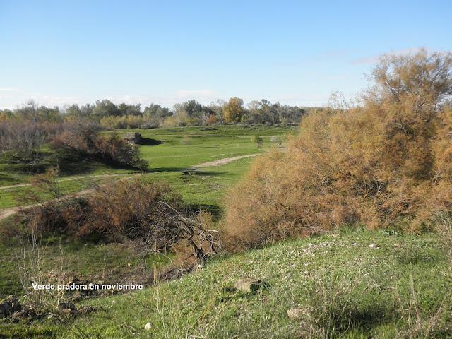 Verde pradera en noviembre