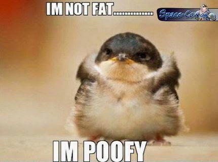 funny bird cute picture