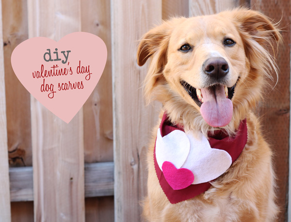 Acute Designsdiyvalentines day dog scarves