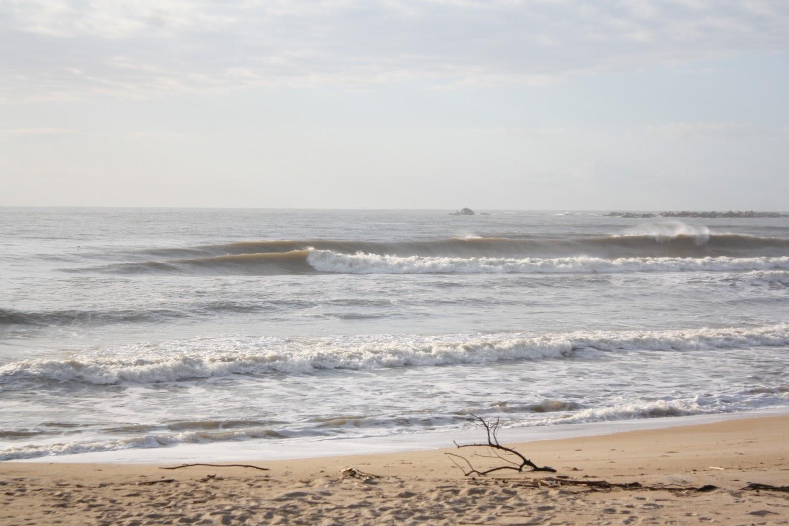 Image Search Gajas Boas Na Praia