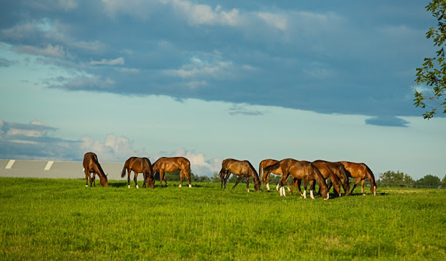 broodmares, kentucky, horses