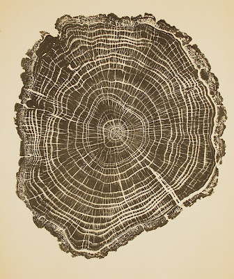 Tree ring print by Bryan Nash Gill