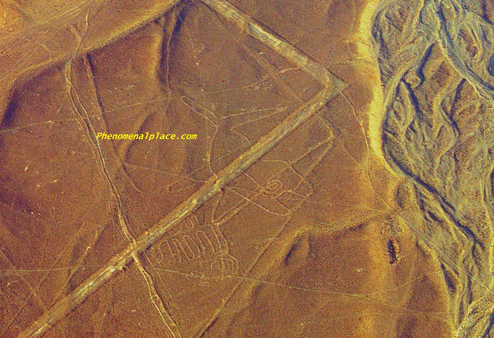 20 Facts About The Nazca Lines