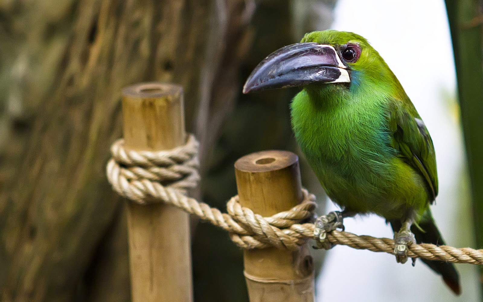 Green Bird Best Wallpaper