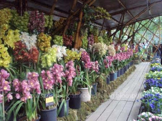Images_International_Flower_show_sikkim