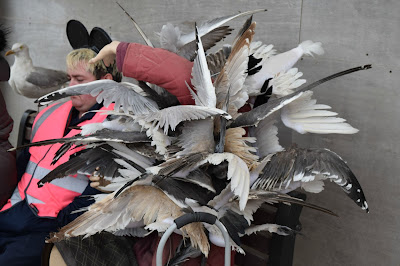 Dismaland Lady attacked by birds