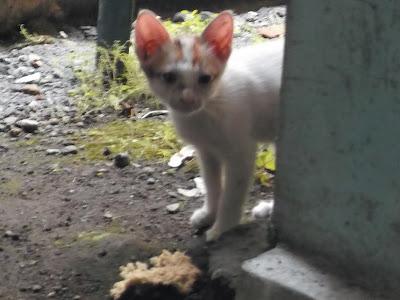 Foto-Foto Anak Kucing Lucu di Luar Jendela Kamar Kost Gue 16