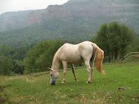 Cavall pasturant davant la Vileta Grossa amb les antenes dels Munts i el Castell Bernat al seu darrere