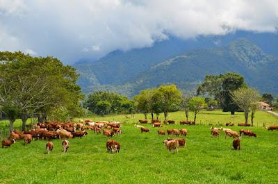 Objek Wisata Padang Mengatas (Mangateh) Payakumbuh Sumatera Barat (Sumbar)