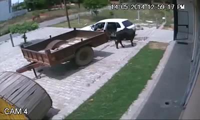Πώς να απαγάγετε μια αγελάδα σε 60 δευτερόλεπτα