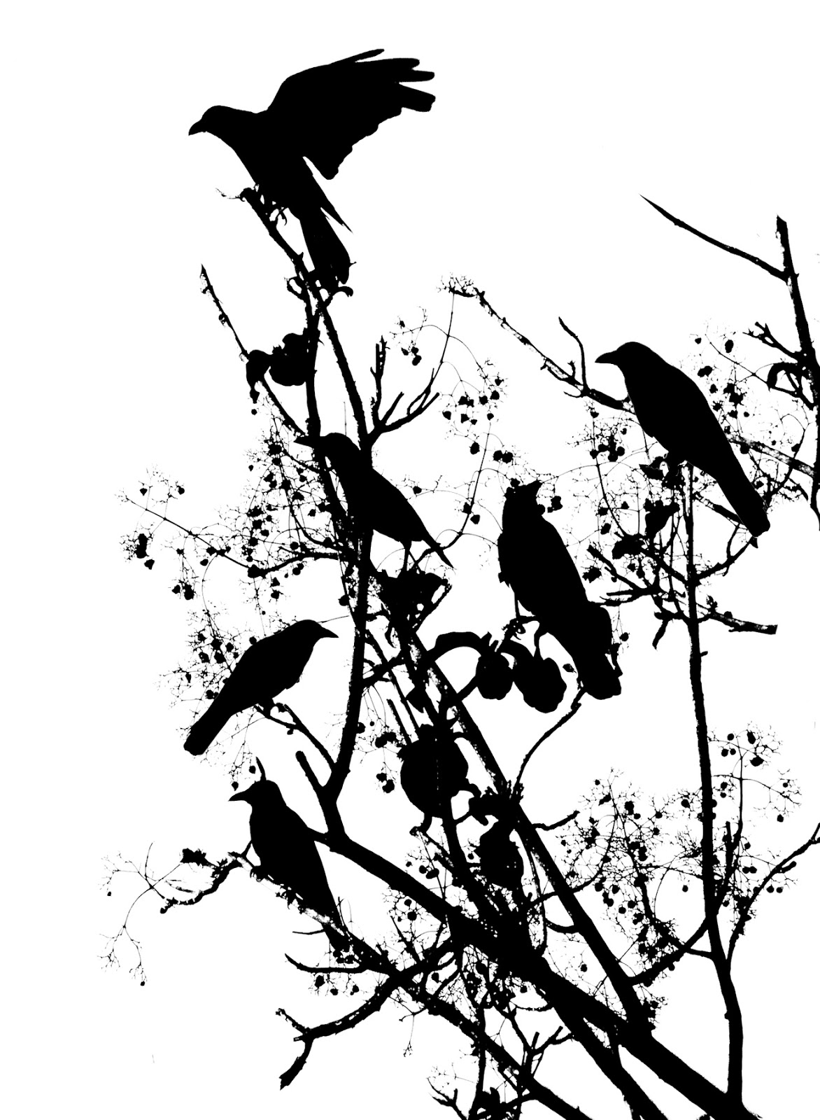 Displaying 19> Images For - Primitive Crow Clipart...