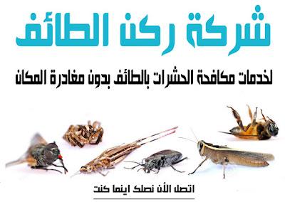 مكافحة حشرات بالطائف