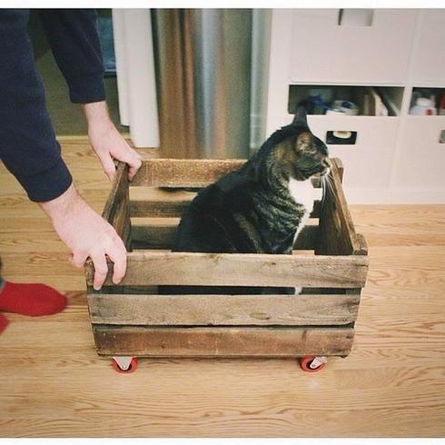 Смешной кот едет в такси по дому