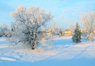 Tree in frost Photo by Bogdan Fiedur