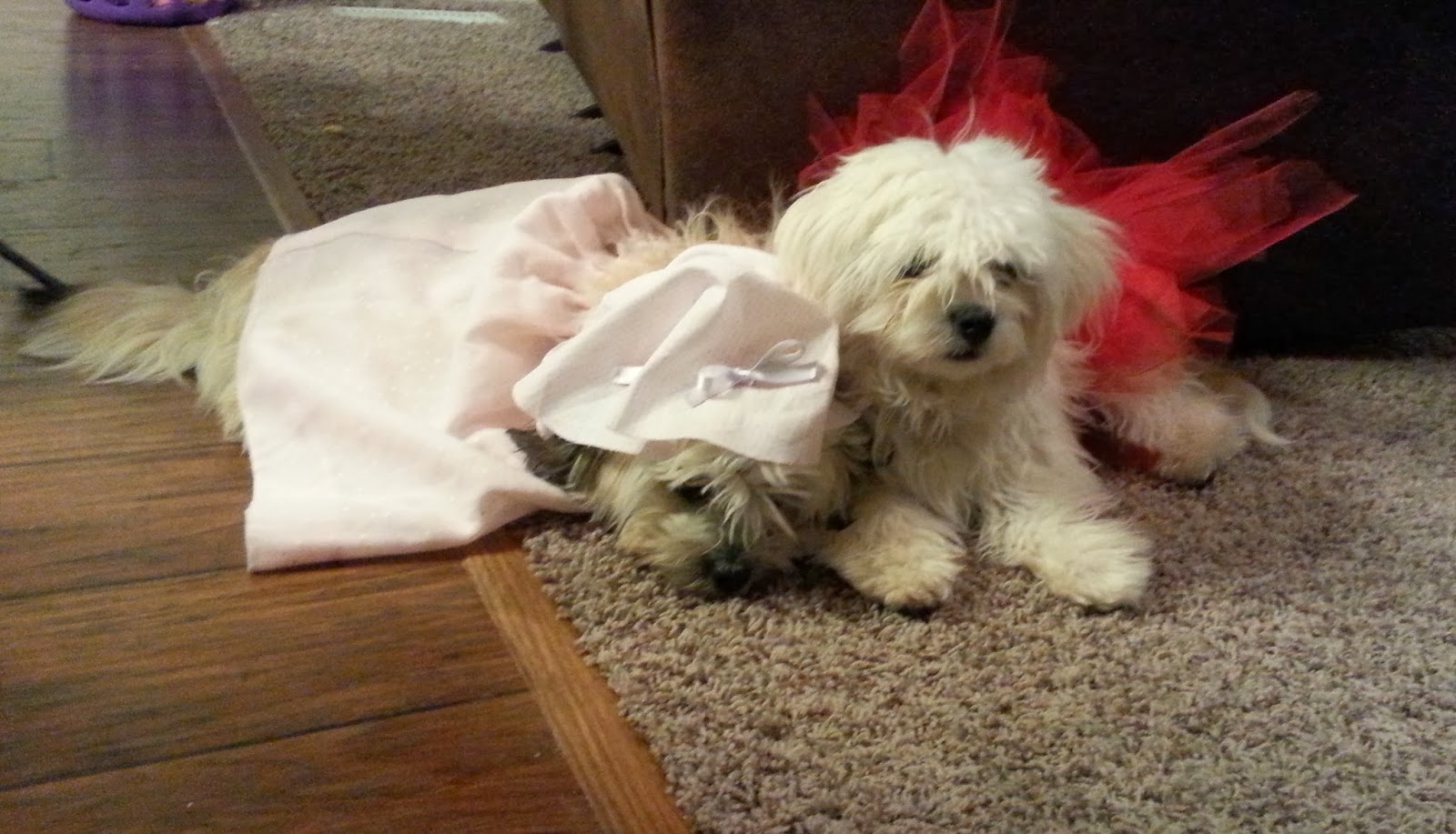 diy fairy tale halloween costumes for puppies red riding hood big bad wolf