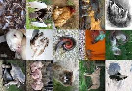 klasifikasi makhluk hidup