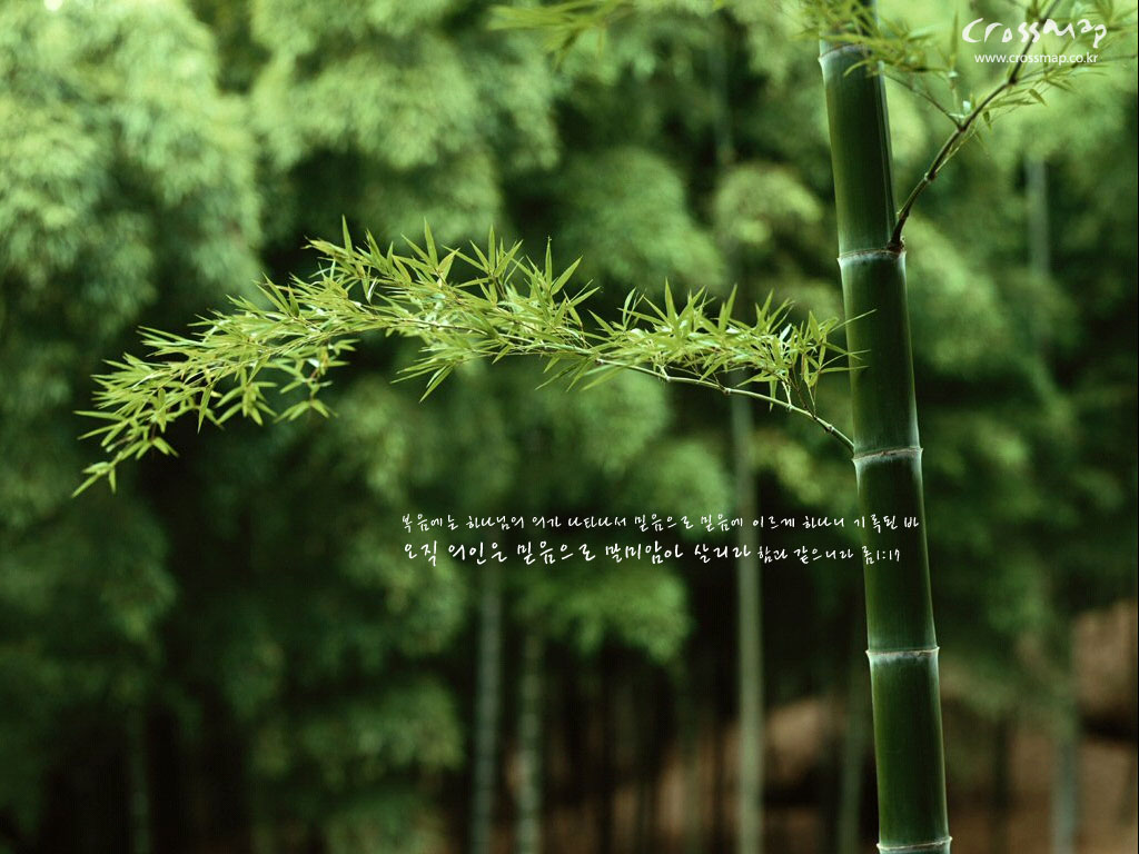 http://1.bp.blogspot.com/-_ZGSN1IRxJM/Tq0cAUaekzI/AAAAAAAABes/dLYdykIMWAE/s1600/bamboo-wallpaper_1024x768_24553.jpg