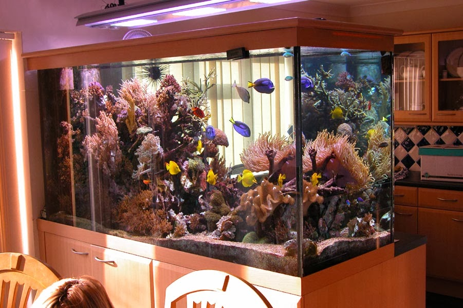 Big tank small kitchen syndrome!  (http://justdonttellmum.blogspot.co.uk/2013/11/good-aquarium-setup-for-kitchen.html)