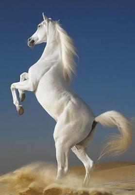 Foto kuda lucu Animasi Gambar Bergerak Sedang Kawin