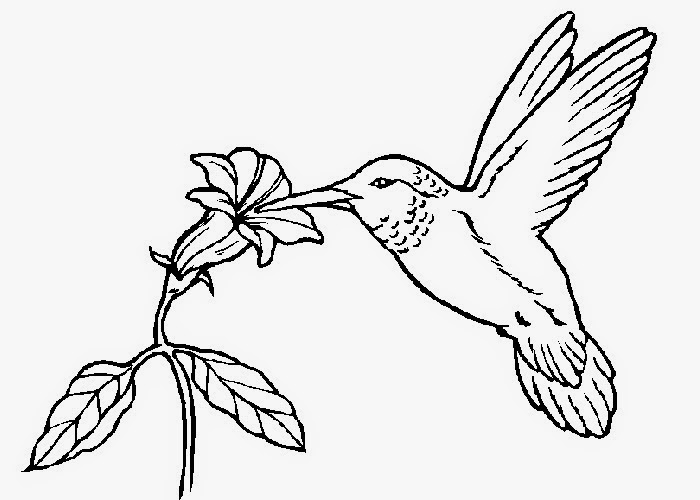 Hummingbird Coloring Pages high quality