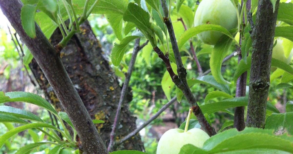 horta jardim e pomar:Coisas do jardim, do pomar e da horta: Este espaço