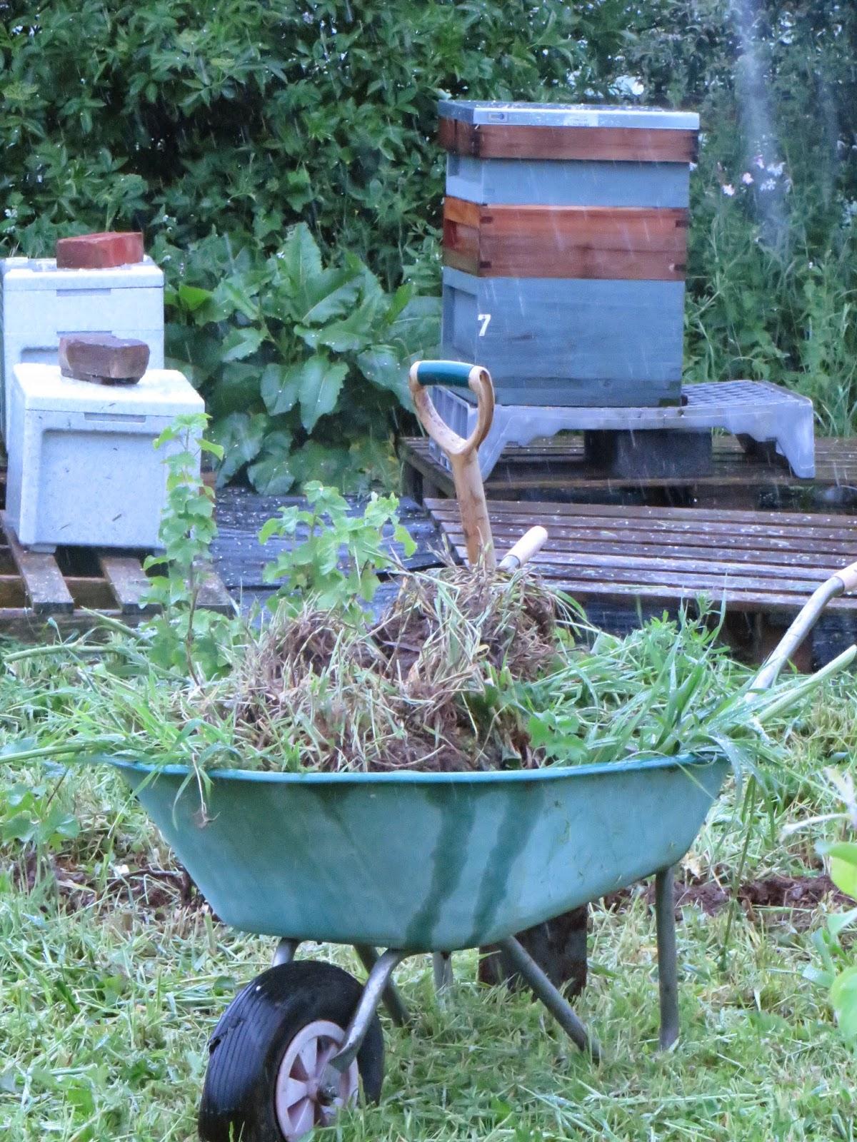 bee plot fruit bush finding