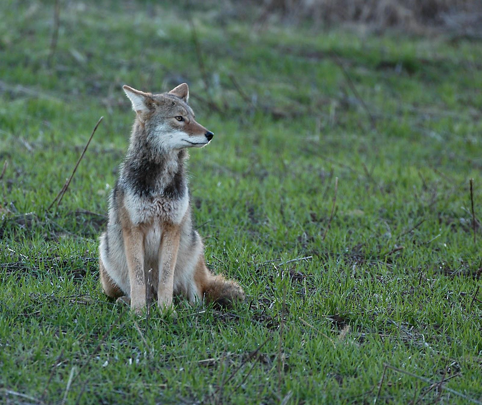 Ohio Wildlife Education Update February 2013