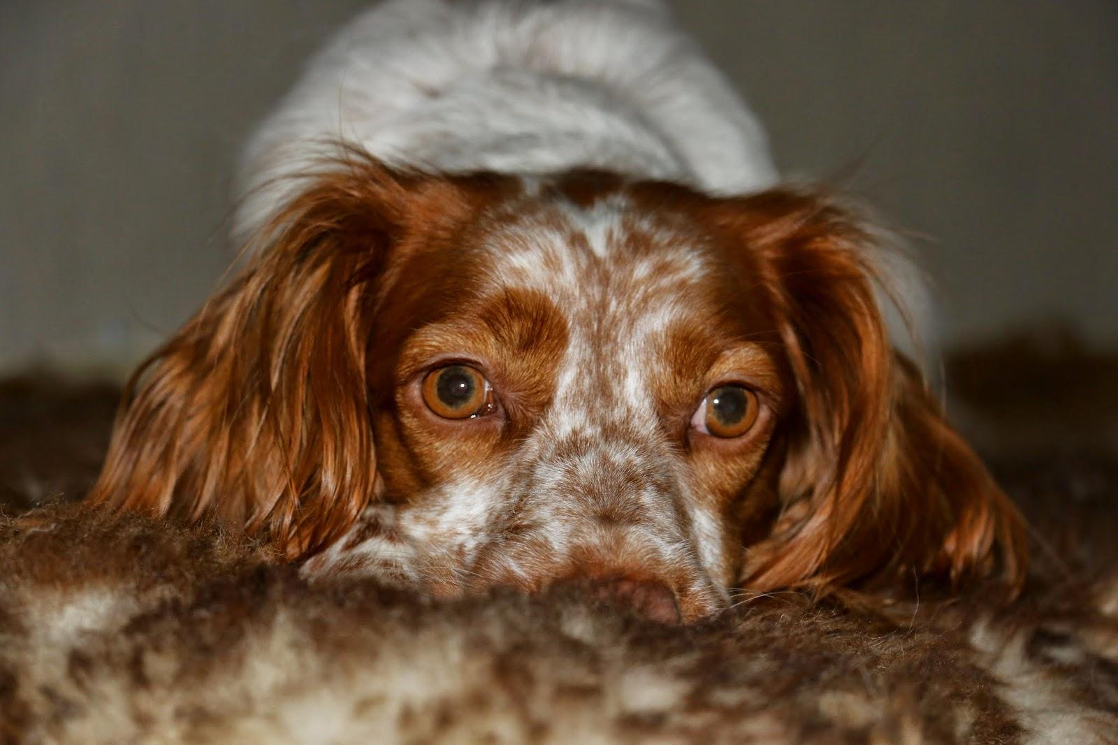 Hundeblog | Fressen, Kuscheln Buddeln...: Ein Fell für Zwei