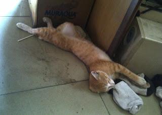 kucing di warnet
