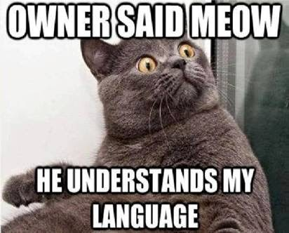 Owner said meow he understands my language. Surprised cat meme