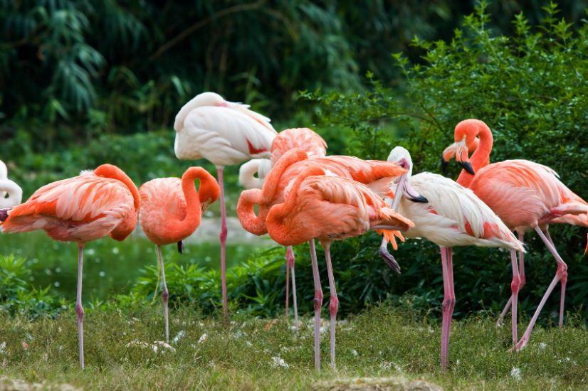 pink flamingo 1 birds - photo #45