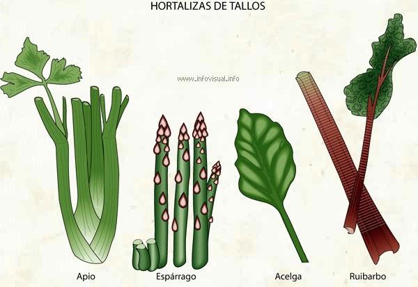Las plantas para que sirven los tallos for Plantas hortalizas ejemplos