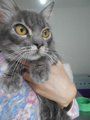 Lindt - gatinha para adoção P6090179