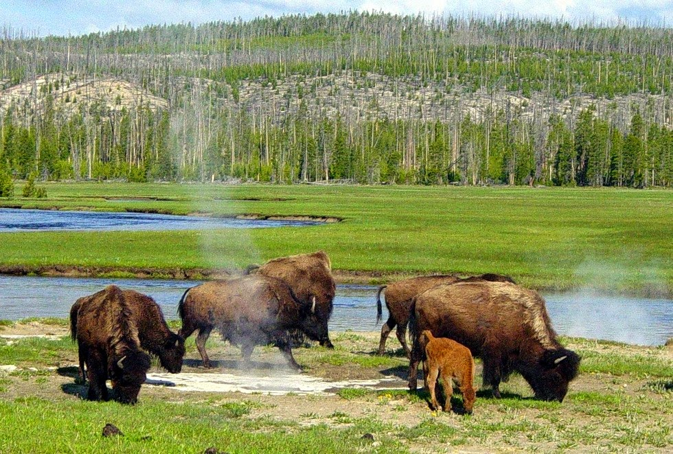 Йеллоустонский национальный парк